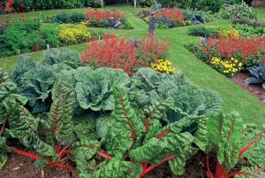 NH-SO11-ediblelandscaping-swiss-chard